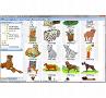 Hunde und Katzen: Übersichtlich und logisch sortiert