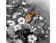 Mit ColorIt freigestellter Schmetterling