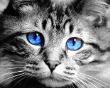 weiteres ColorKey/ColorIt-Beispiel